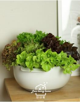 『綠谷沙拉生菜園』沙拉花束500g(免運,限宅配出貨)